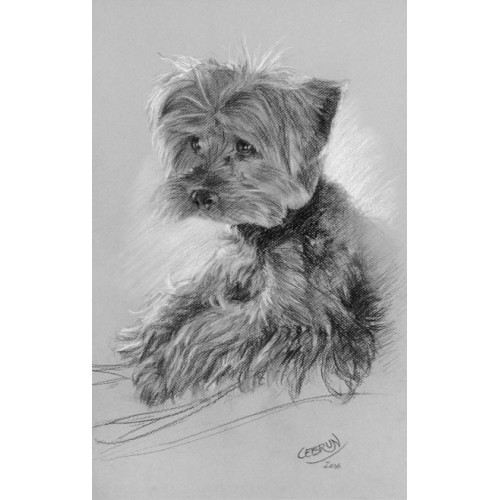 Portrait animalier au fusain