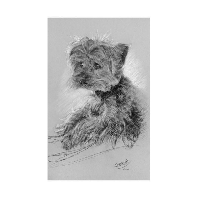 Portrait animalier au fusain - Grand format 32,5 x 50 cm